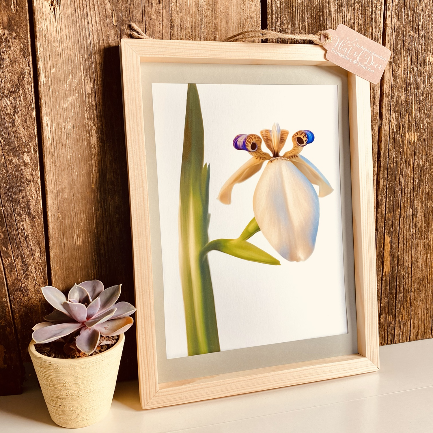Details of the final product in a natural wood frame Collection of flower illustrations (neomarica gracilis)