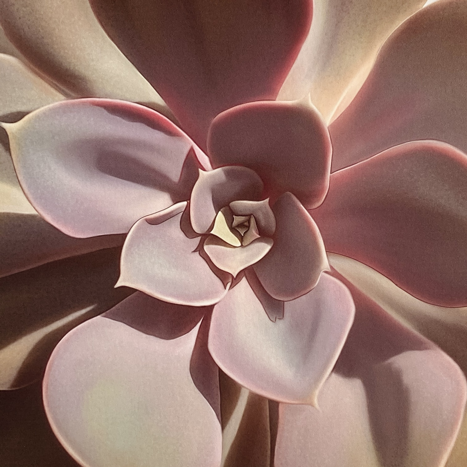 """In the sample a print mounted on a neutral wooden frame. Delicate illustration of an Echeveria species called """"The Pearl of Nuremberg"""" in pastel colors with lilac tones characteristic for this exotic plant."""